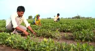 agri labour