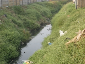 Effluent, which got released last year by accident, has still not been cleaned up