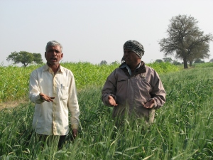 Farmers amid high quality Bhaliya wheat crop, which grows only in arid Dholera SIR area