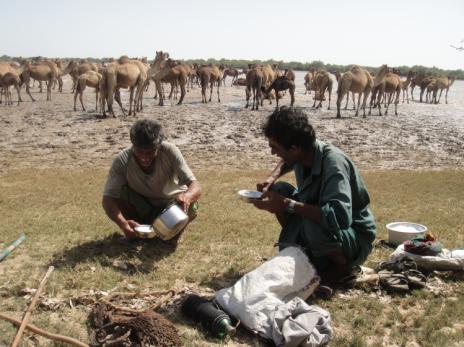 kharai camel2