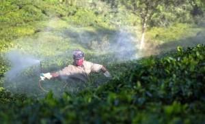 Pesticide Documentation in Tea estates