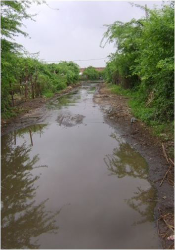 Another approach road to Dholi village, Surendranagar district