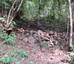 A forest patch with iron ore, waiting to be extracted