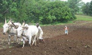 farmer_3