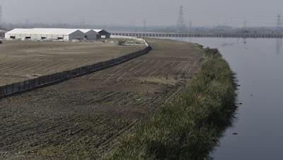 WCF on Yamuna flood plains