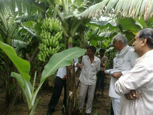 gujarat farmers