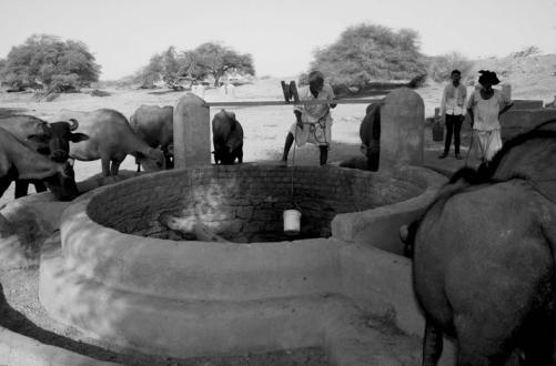 Well and animal trough at Nanda