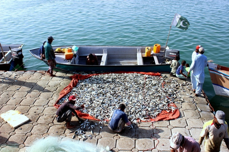 Gwadar-harbour-fish-haul-1