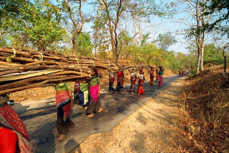 Women collecting firewood near Dhariyawad, Rajasthan state, India, Asia