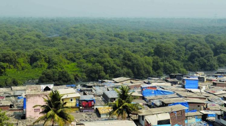 mangroves mumbai