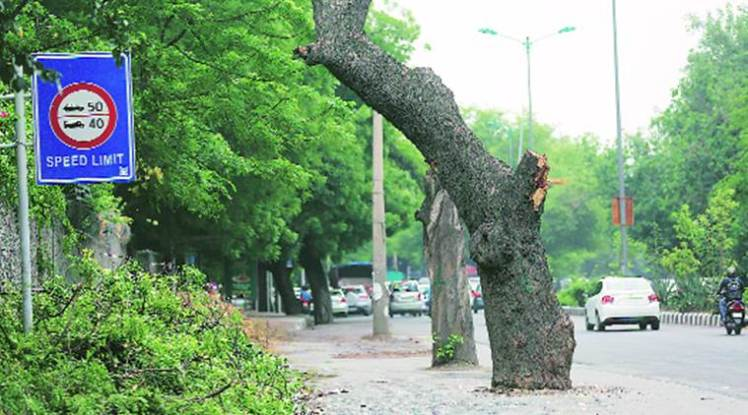 tree-in-delhi-759