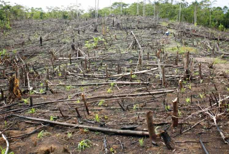 deforestation_26312