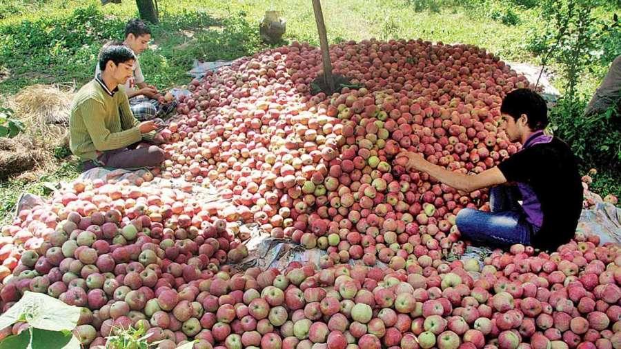 744874-apples-kashmiri-101818