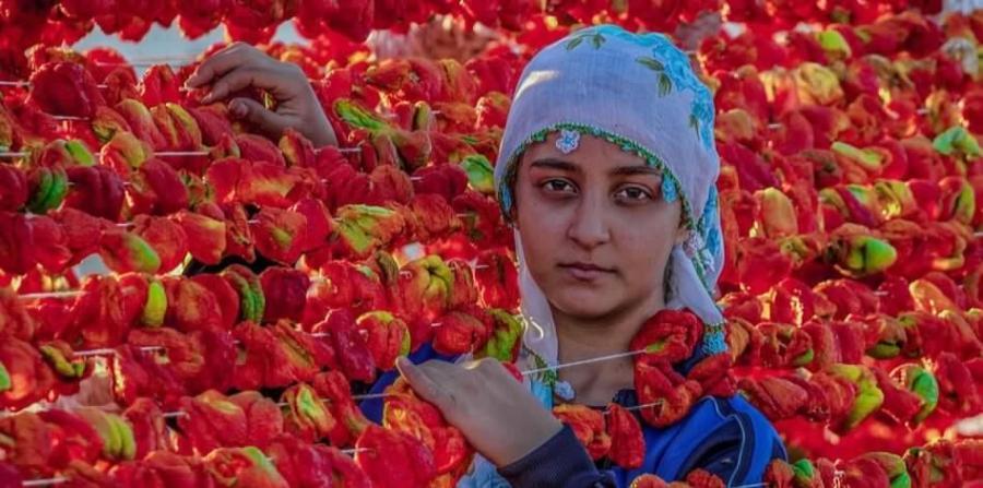 chilli-pepper-farmer-pixabay