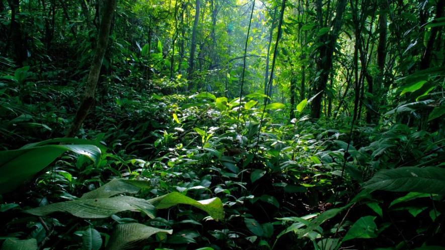 Biodiversity_India